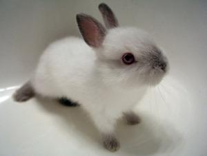 아기_토끼